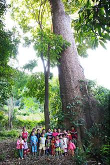 children-with-big-tree