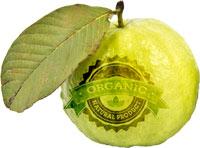 cwf-guava