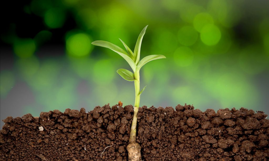 Photo of plant - for article on fertilizing soil using urine - Farming God's Way ministry of Heaven's Family