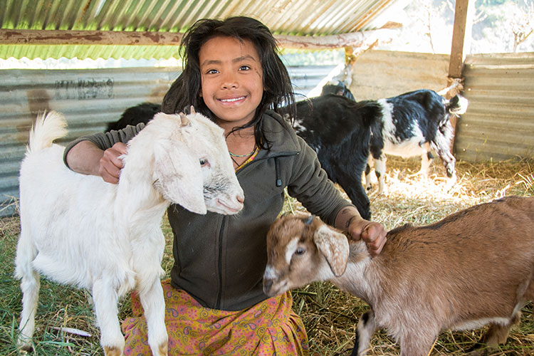 Girl with her goats