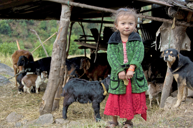 Little girl with goats