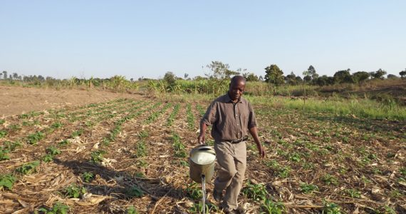 Victor watering his Farming God's Way field