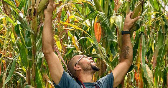 Large corn stalks in Kenya