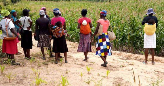 Farming God's Way in Zimbabwe